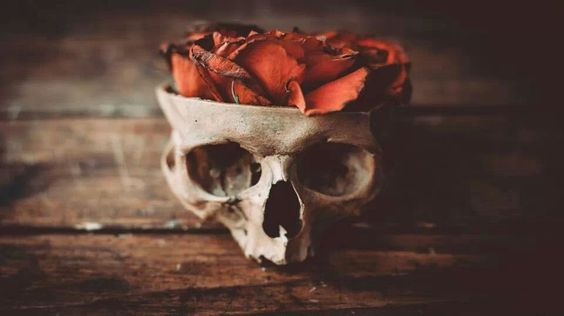 Nico di Angelo // Persephone holding this but instead of petals a pomegranate inside?