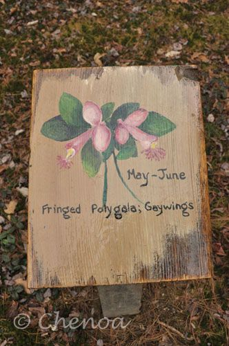 Disc golf courses provide the perfect framework for environmental education. This sign comes from Flatrock Disc Golf in Athol, MA and depicts the flowering characteristics of a Fringed Polygala that runs throughout the course. #discgolf #environmentaleducation #explorediscgolf