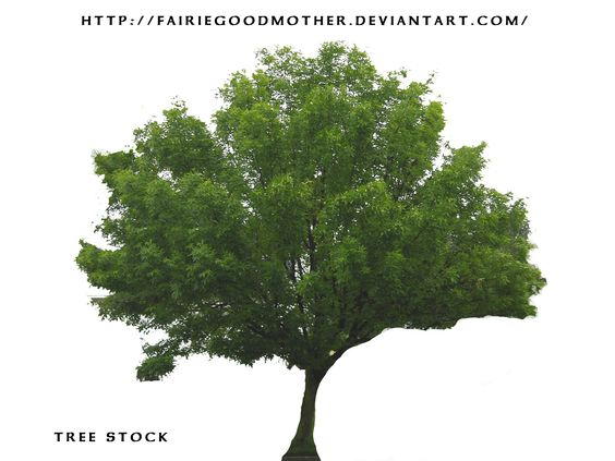 tree Stock psd
