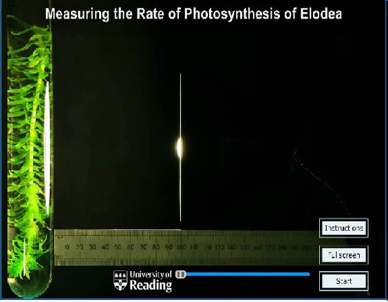 experiment on the effect of light Biology - how light intensity affects the rate of photosynthesis 2110 words | 9 pages ¡v does the light intensity affect the rate of photosynthesis the investigation in this experiment i.