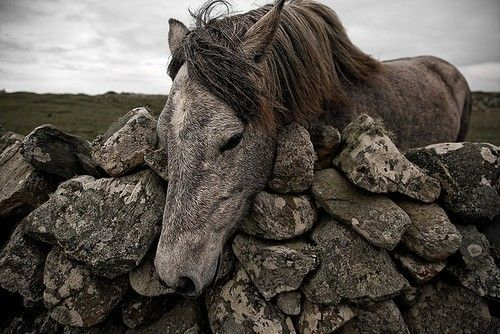 a sweet horse begging to be petted - one of 8 picks for this week's Friday Favorites - Living Vintage