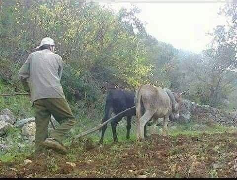 الفلاحة على الدواب Horses Animals