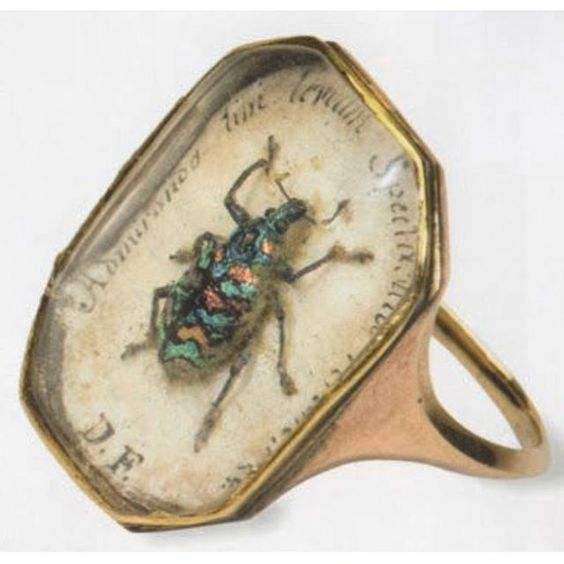 200 year old ring found in the entomological collection of the London Natural History Museum. #entomology
