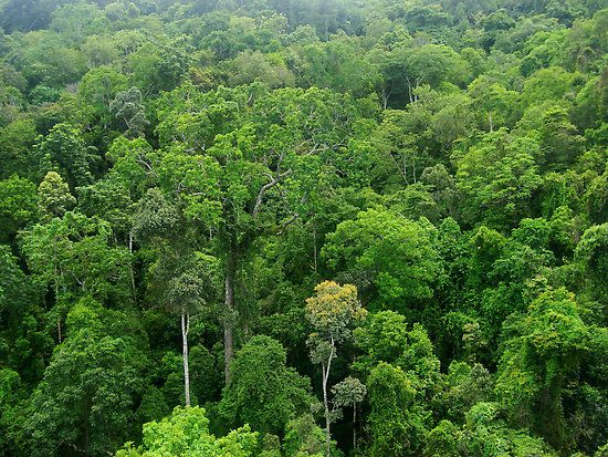 Did you know that trees of a tropical rainforest are so for Canopy of trees