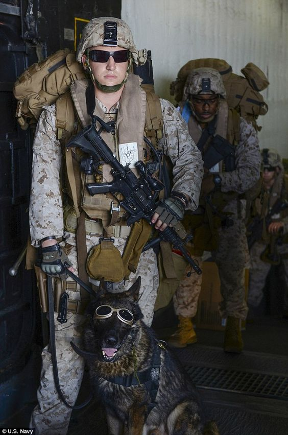 Heroism of U.S. military war dogs revealed in new book #dailymail