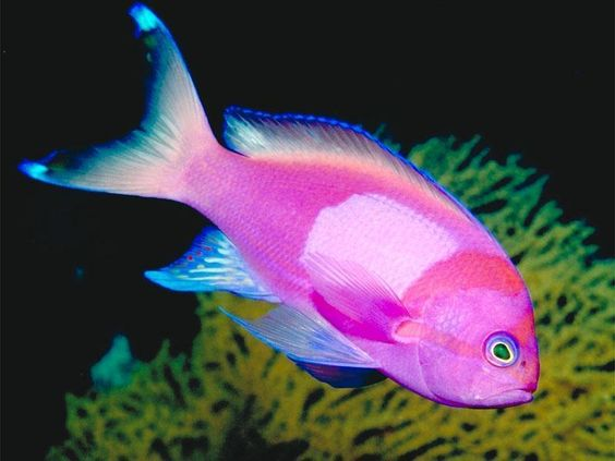 Image detail for -Tropical Fish - Fish Photo (5412589) - Fanpop fanclubs