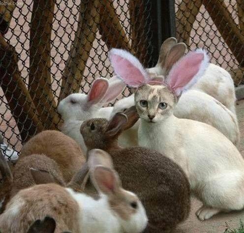 On a retrouvé le chat-pin de Pâques !