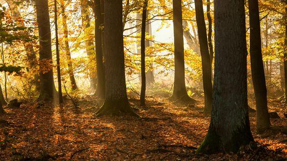 Warm Autumn Light I by STARS on 500px