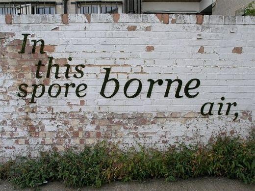 I want moss graffiti on my house!