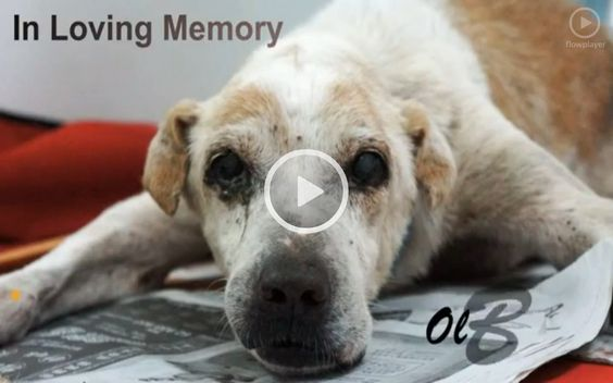 A must watch for #dogs lovers. Heartbreaking :(   http://www.godvine.com/Lonely-Old-Dog-Has-His-Dying-Wish-Come-True-To-Be-Loved--1943.html