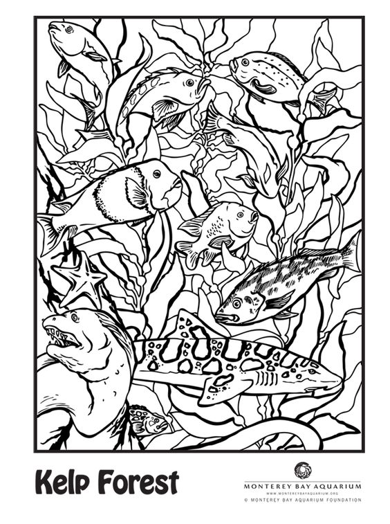 Kelp forest, The leopard and Coloring pages on Pinterest