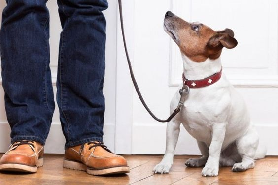 The Busy Person's Guide to Dog Training | WOOFipedia by The American Kennel Club: