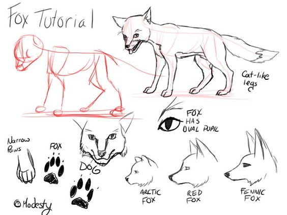 Tutorial_Foxes_by_modesty., How to draw Animals, tutorials for drawing animals, animal anatomy,