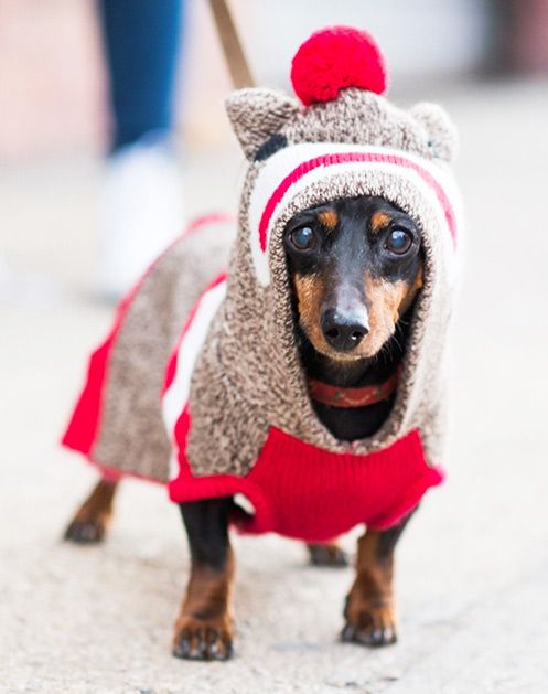 New York Citys Best-Dressed Dogs of the Year