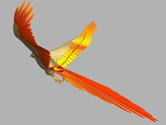 imagens de pássaros coloridos em voo - Pesquisa Google