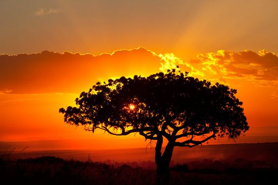 The East African landscape is truly beautiful. Description from pinterest.com. I searched for this on bing.com/images