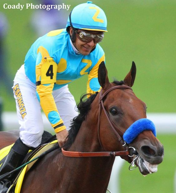 American Pharoah after the 2015 Breeders' Cup Classic (photo: Coady Photography)