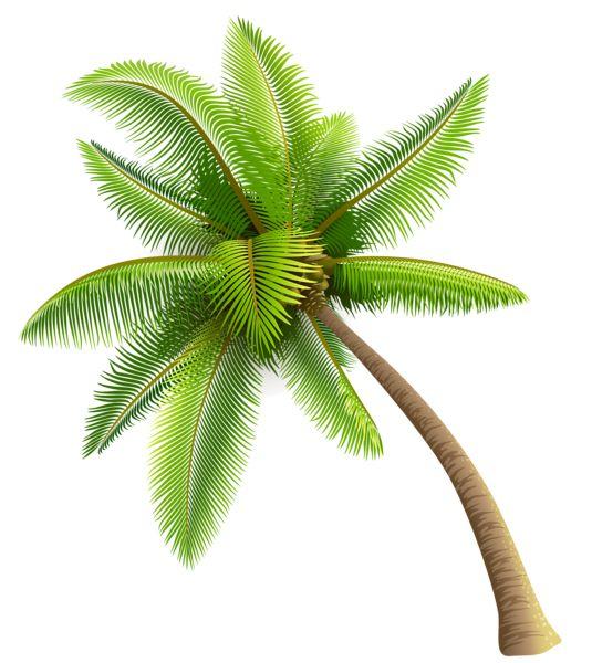 Palmen, Palmen and Bäume on Pinterest