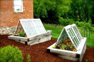 """What a great use of old windows - set these up to take the most advantage of the winter sun.  Leave the ends open for necessary air circulation to avoid problems known as """"sick greenhouse"""" where no air circulation and unlimited heat and humidity create the perfect environment for bugs, mold and mildew."""