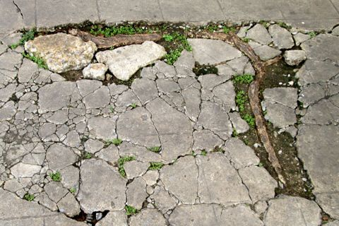 Tree Roots Are Buckling My Concrete Driveway Tree Roots Planting Shrubs Concrete Driveways