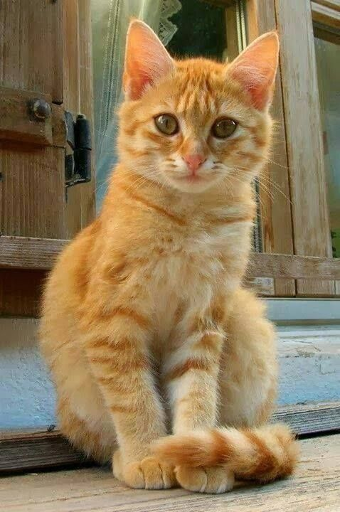 Mirror Mirror On The Wall Who S The Cutest Cat Of All Orange
