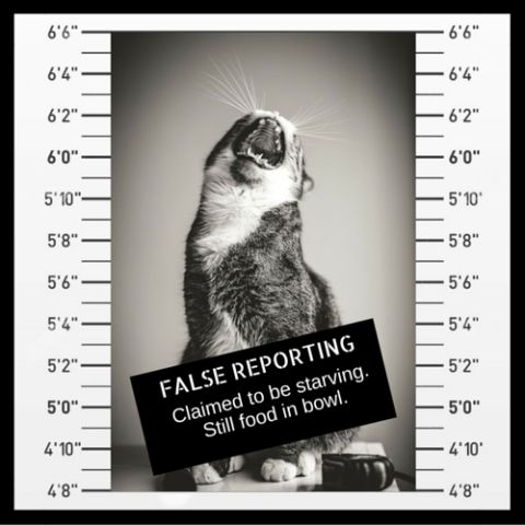 Petslady's Most Wanted: Mugshots Of Cats We Sent To Jail | Petslady.com