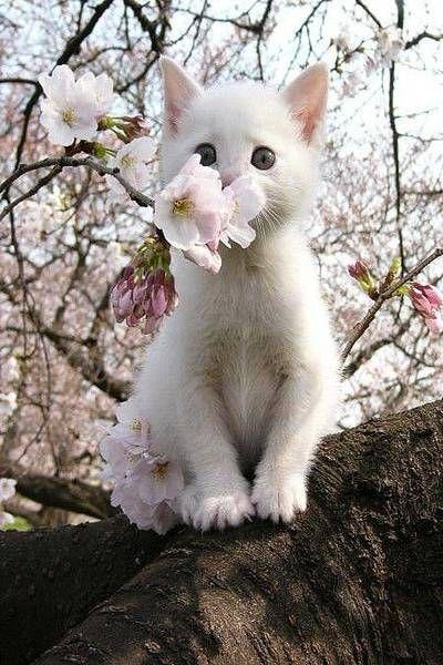 Three cute white cats