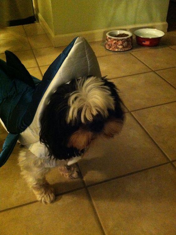 sharkpup