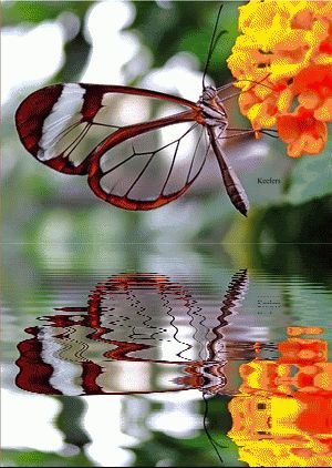 Beautiful Glass Winged Butterfly.
