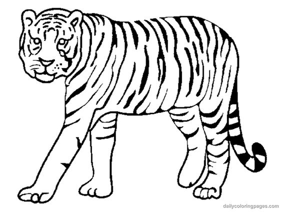 realistic tigers coloring pages coloring pages pinterest - Coloring Pages Tigers Realistic