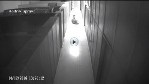 Can't Stop Laughing After Watching This Security Camera Video http://ift.tt/2ihTpBZ