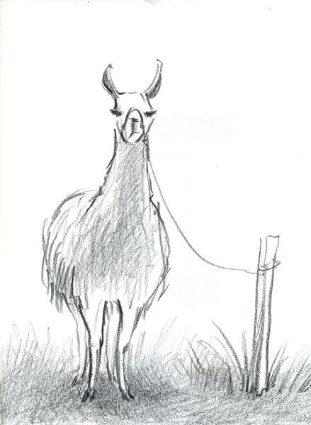 Line Drawing Llama : Llama face drawing imgkid the image kid has it