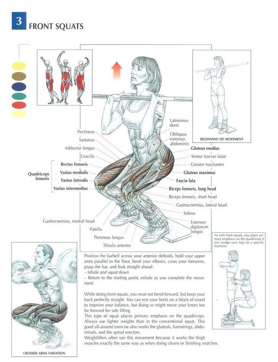Front Squats ♦ #health #fitness #exercises #diagrams #body #muscles #gym #bodybuilding #legs