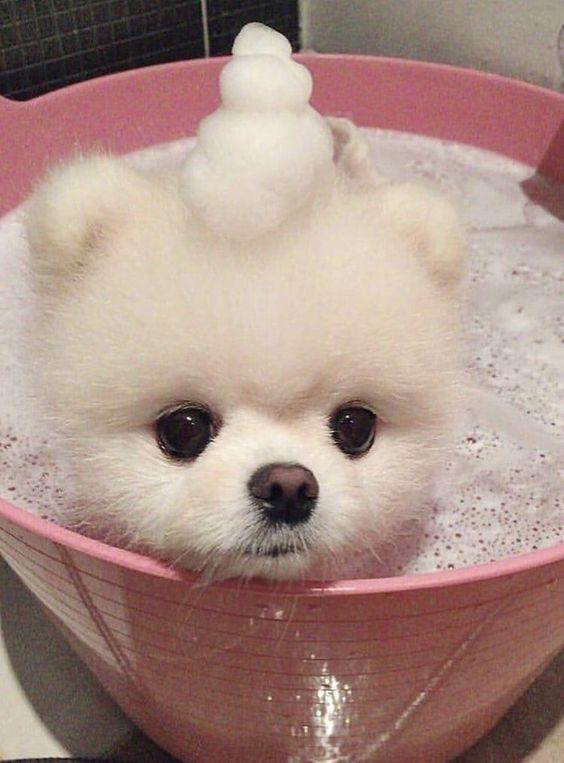 Tắm cho Phốc sóc