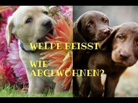 Welpe Beisst Wie Abgewohnen Mia And Me Dogtv Youtube Welpen Welpen Erziehen Hunde Welpen