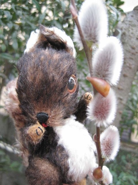 His name is OREO. He is the squirrel which I made.