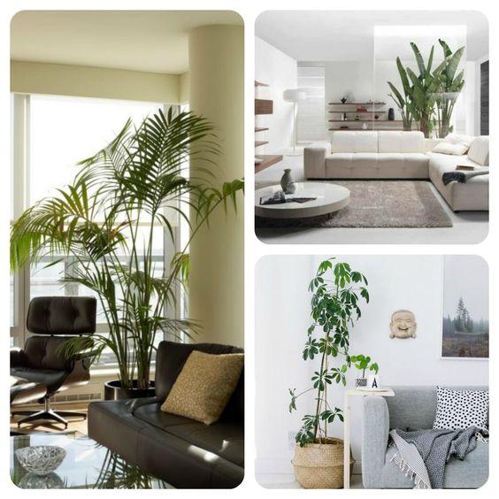 idées mobilier UP&GREEN est dans trucsdenana : comment décorer son intérieur avec des plantes. #idées #mobilier #intérieur #design