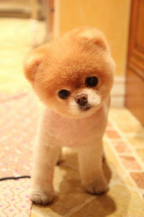 Awww! It's Boo!!! :D