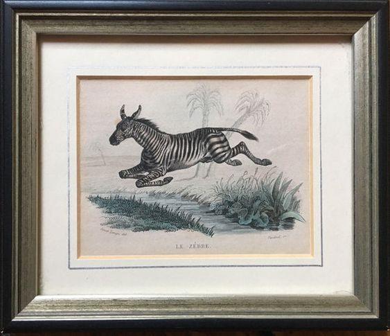 1837 ZEBRA impresión raro original antiguo safari africano y animal mano grabado color - también disponible enmarcado y listo para colgar