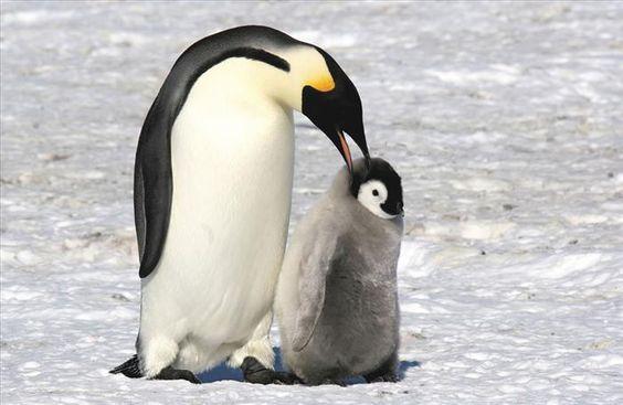 Madres animales