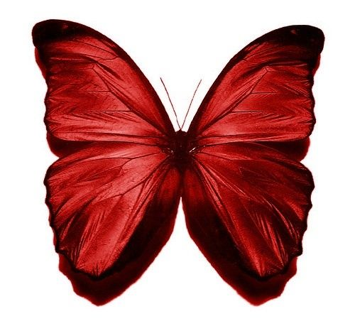 Butterfly pinned with Bazaart