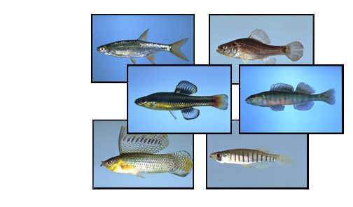 Florida lakes and freshwater fish on pinterest for Florida freshwater fish species