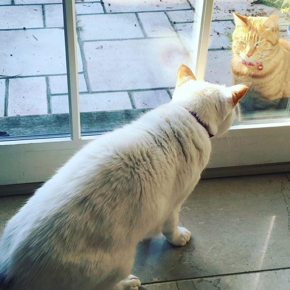 Hi, there! What's up? #mahonka #whitecat