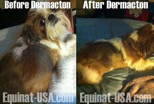 Dermacton Helps Shih Tzu After 2 Years Of Hair Loss Skin Problems