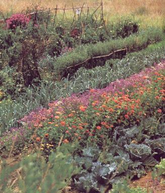 La bonne association des fleurs et plantes du potager les for Association plantes jardin