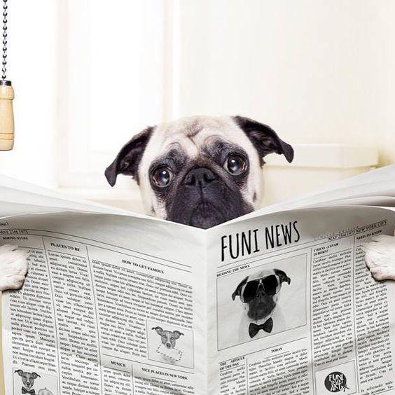 Die FUNI News sind da Hol dir jetzt unseren kostenlosen FUNI Newsletter ins Postfach und wir halten dich auf dem Laufenden.  Zum Beispiel über:  neue FUNI SMART ART Produkte  limitierte Auflagen und Sonderverkäufe  coole Aktionen & Termine  angesagte Design-Trends im FUNI SHOP  Insider-Tipps aus für und rundum Berlin  http://ift.tt/1Q9r0qi  #funi #funismartart #funiberlin #spaß #spruch #sprüche #spruchdestages #berlin #news #lustigesprüche #instagood #instalove #mops