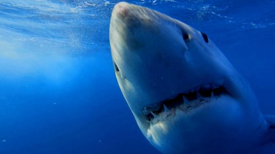 SHARK WEEK, television's longest running must-see summer TV event, returns to Discovery Channel in 2015 for its 28th year with another summer of shark-filled specials!