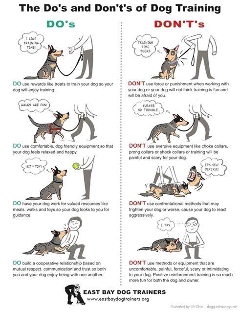 Dog Training East Bay Dog Training Stuffed Animal Youtube Dog