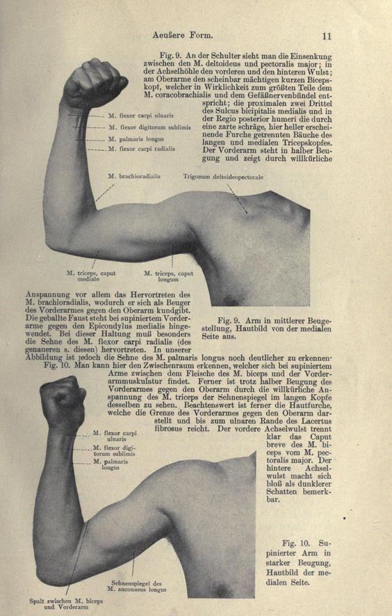 Figs. 9 & 10. Flexed arms. Handbuch der Anatomie des Menschen. 1896 ...