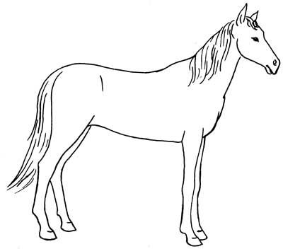 How to draw horses draw horses draw a horse draw horses how to draw horses draw horses draw a horse draw horses pinterest horse drawn horse and horse drawings ccuart Images